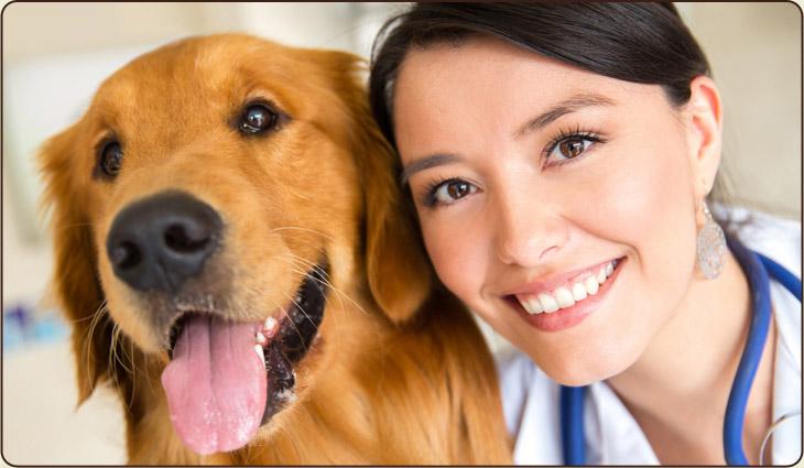 Dieta Terapêutica para Cães